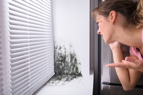 Mould removal in Surrey & Vancouver